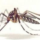 Médicos del Mundo considera de máxima Alerta Epidemiológica situación de Dengue y Zika