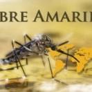 Médicos del Mundo alerta sobre riesgos de fiebre amarilla en Brasil y escenarios de Dengue-Zika en Argentina